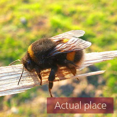 Bee, wasp, fly, insect, buzzing, movements - 01