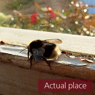 Bee, wasp, fly, insect, buzzing, movements - 02