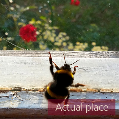 Bee, wasp, fly, insect, buzzing, movements - 03