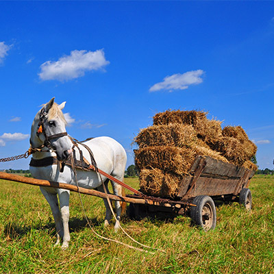 Cart, cart horse, sleds, wagon - 01