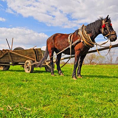 Cart, cart horse, sleds, wagon - 02