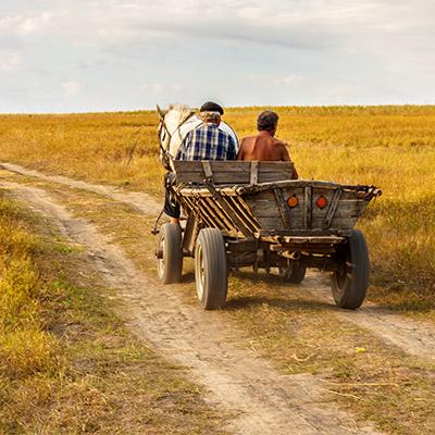 Cart, cart horse, sleds, wagon - 03