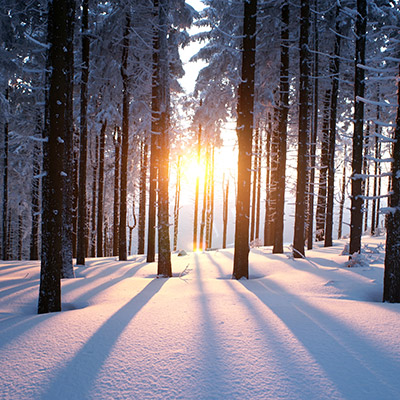 Creaking trees, forest, winter, wind blowing - 01
