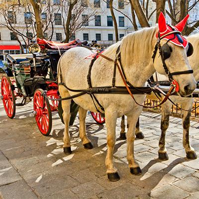 Horse, cart, passing, street stone