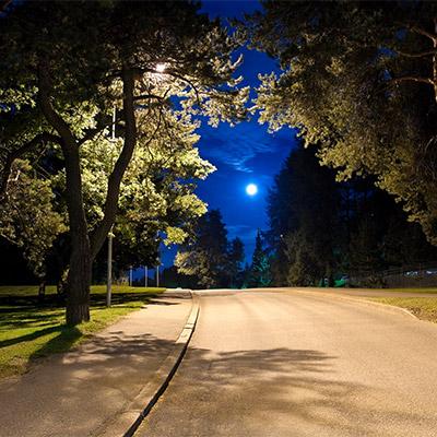 Night birds, distant city traffic