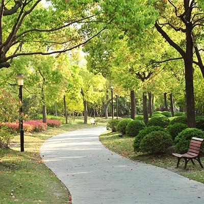 City park, birds, Chiffchaff
