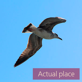 Seagulls, harbor