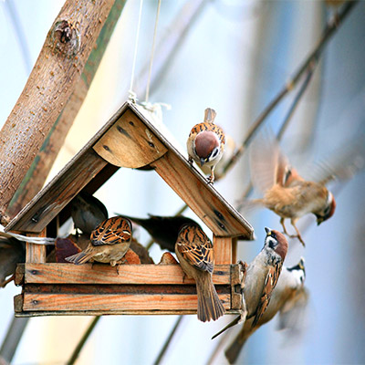 Small town, birds at feeder, early spring
